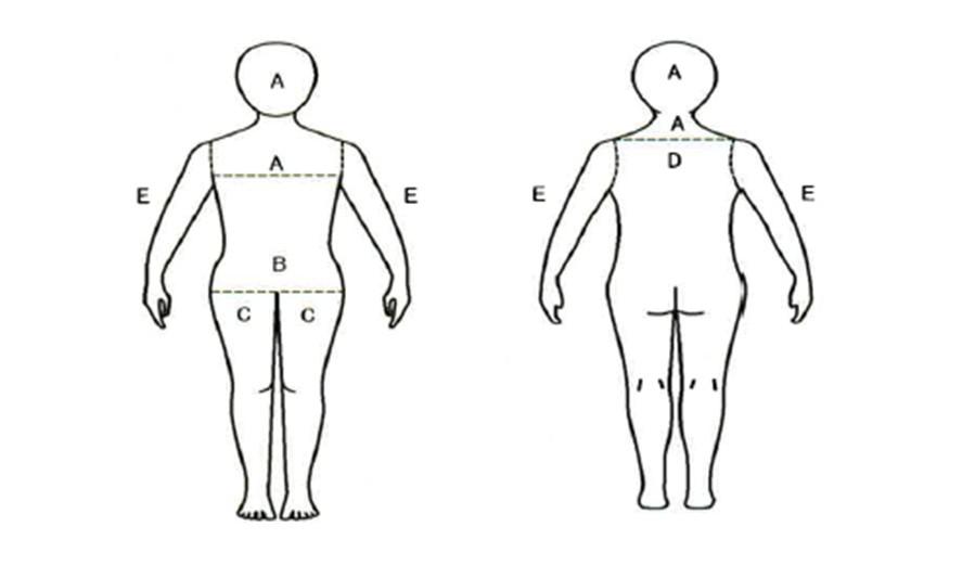 身体部位图解腰